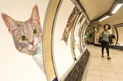 https://curare.berliat.fr/read/10458/Every-advert-in-Clapham-Common-tube-station-replaced-with-cat-photos-Metro-News